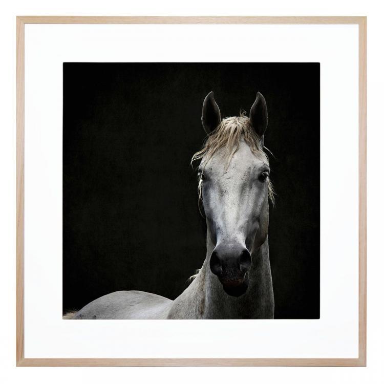 White stallion framed print