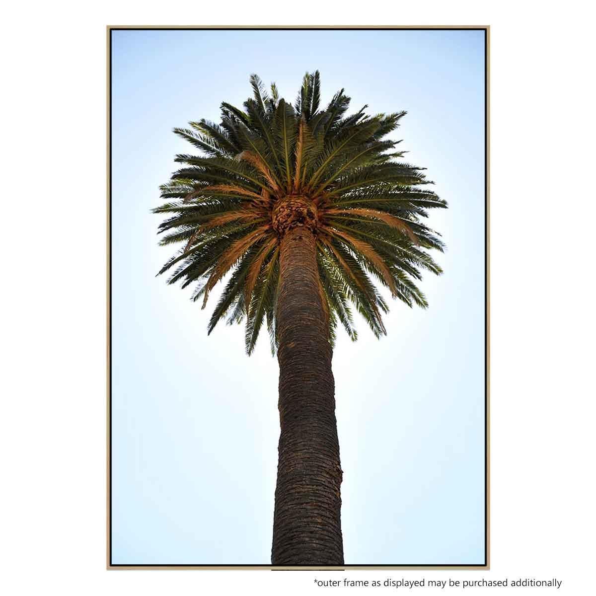 big palm tree canvas print buy australian made canvas print