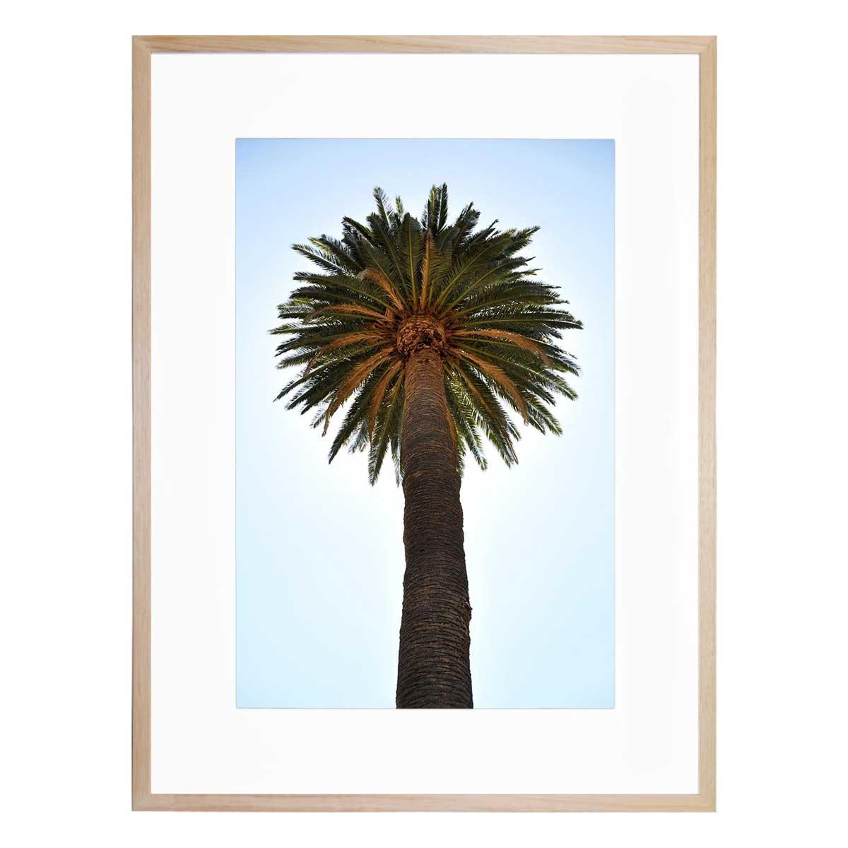 Big palm tree united interiors buy australian made for Where to buy framed art