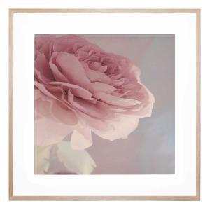 Girl And Rose - Framed Print