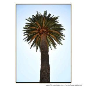 Big Palm Tree - Canvas Print