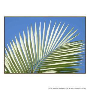 Palm Leaf Fan - Canvas Print