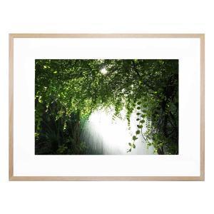 Canopy Verdis