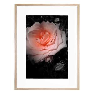 Aranciata Bloom - Framed Print