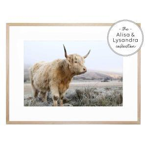 Highland 2 - Framed Print