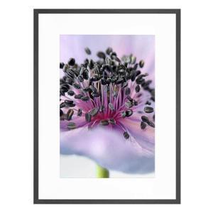 Anemone - Framed Print