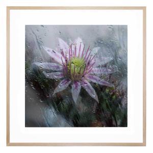 Blossom Tears - Framed Print