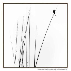 Birdsong 2 - Canvas Print
