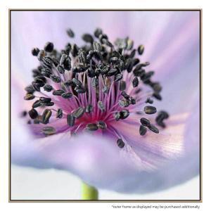 Anemone - Canvas Print