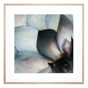 Cactus - Framed Print