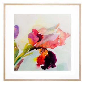 Shiralee - Framed Print