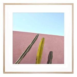 Cactus Trio - Framed Print