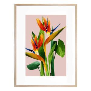 Birds of Paradise - Framed Print
