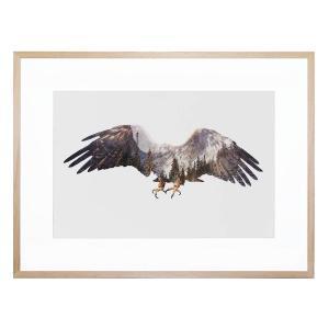 Arctic Eagle - Framed Print