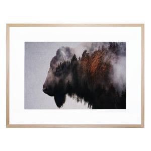 Bison - Framed Print