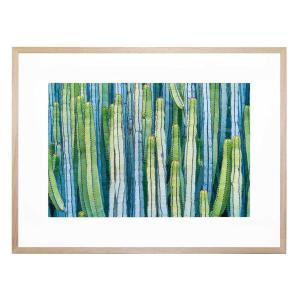 Cacti - Framed Print