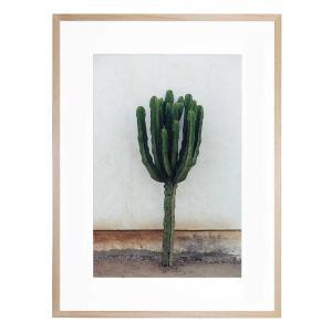Desert Bloom - Framed Print