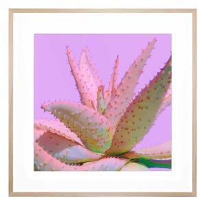 Agave Bloom - Framed Print