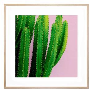 Botanic Fuschia - Framed Print