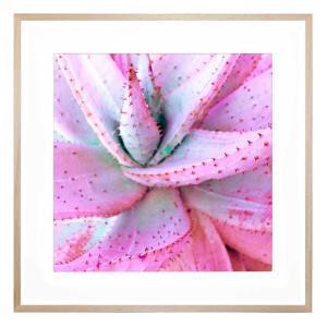 Succulent Rosette - Framed Print