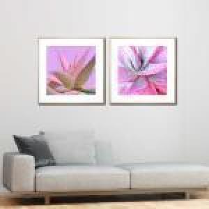 Agave Bloom / Succulent Rosette - Framed Prints