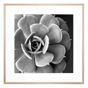 Cacti Noir - Framed Print