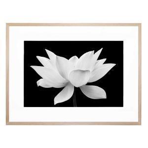 Lotus Me 2 - Framed Print