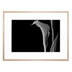 Calla - Framed Print