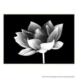 Lotus Me - Canvas Print