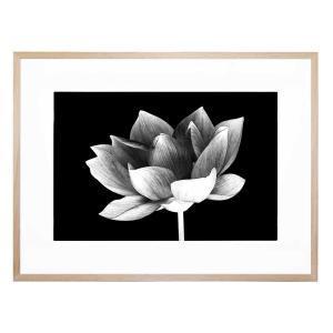 Lotus Me - Framed Print