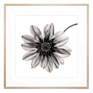 Mono Fiore - Framed Print