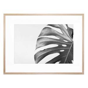 Mono Foglia - Framed Print