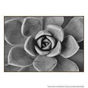 Succulent Wish 2 - Canvas Print
