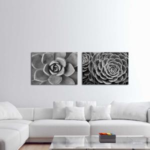Succulent Wish 2 / Succulent Wish - Canvas Print