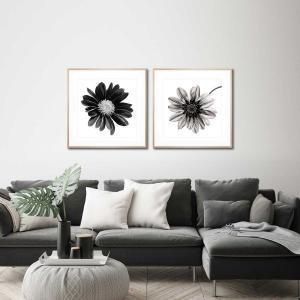 Gerbera Noir / Mono Fiore - Framed Print
