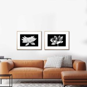 Lotus Me 2 / Lotus Me - Framed Print
