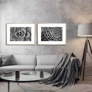 Succulent Wish 2 / Succulent Wish - Framed Print