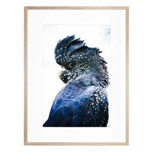 Cockatoo Blue - Framed Print