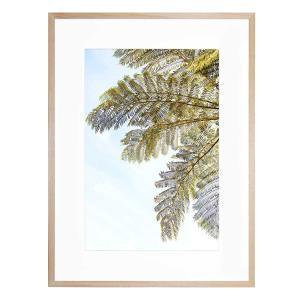 Fern - Framed Print