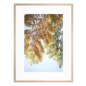 Fern Frond - Framed Print