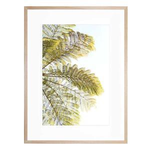 Fern II - Framed Print