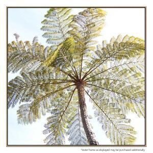 Fern Tree - Canvas Print