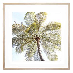 Fern Tree - Framed Print