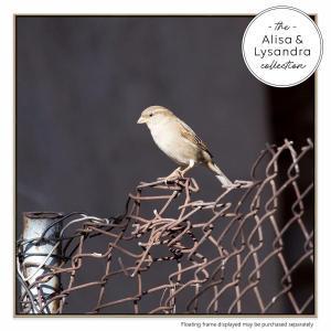 The Bird Watch - Canvas Print