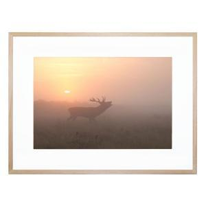 Misty Morning Stag - Framed Print
