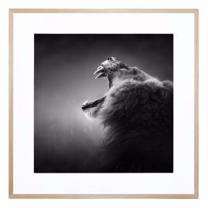 Meeow - Framed Print