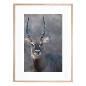 Still And Quiet - Framed Print