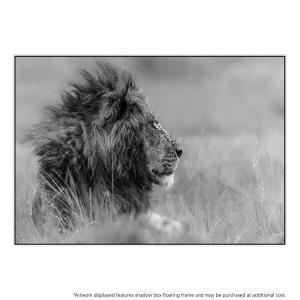 Lone King - Canvas Print