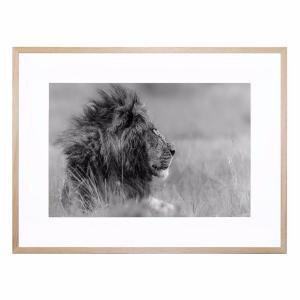 Lone King - Framed Print