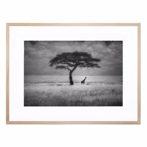 Shady Tree - Framed Print